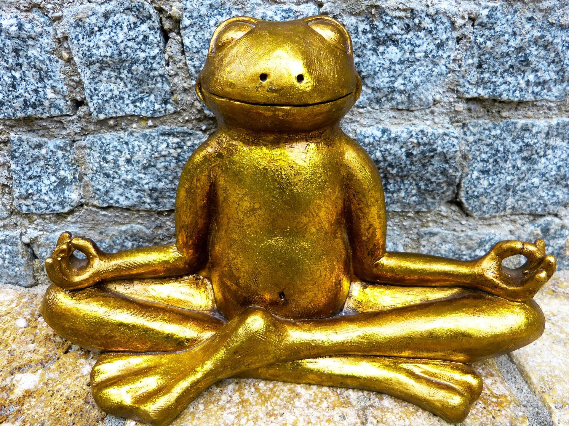 瞑想してるカエル